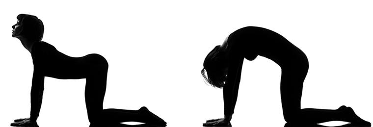 Postura del Gato Yoga
